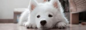 Imagen del curso Como cuidar a tu mascota
